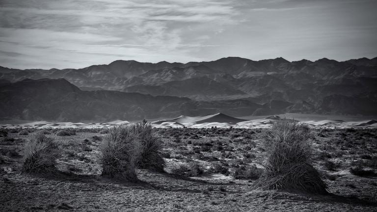Devil's Corn Field, Death Valley (USA, 2013)