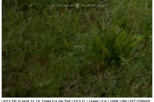 Leica Tri-Elmar-Elmar 16-18-21mm f/4 | 16mm | Infinity | Lower Left Corner | f/4