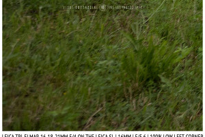 Leica Tri-Elmar-Elmar 16-18-21mm f/4 | 16mm | Infinity | Lower Left Corner | f/5.6