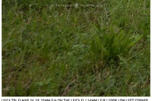 Leica Tri-Elmar-Elmar 16-18-21mm f/4 | 16mm | Infinity | Lower Left Corner | f/8