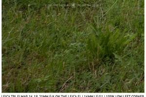 Leica Tri-Elmar-Elmar 16-18-21mm f/4 | 16mm | Infinity | Lower Left Corner | f/11