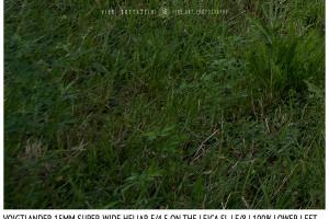 Voigtlander 15mm Super-Wide Heliar f/4.5 v. III | Infinity | Lower Left Corner | f/8