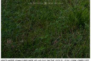 Voigtlander 15mm Super-Wide Heliar f/4.5 v. III | Infinity | Lower Left Corner | f/16