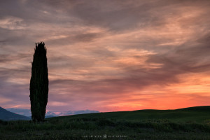 Val d'Orcia Cypresses (Italy, 2017)