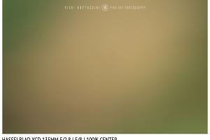 Hasselblad XCD 135mm | Close Focus | Center | f/8