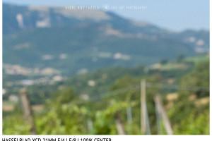 Hasselblad XCD 21mm | Close Focus | Center | f/8