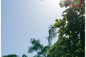 Hasselblad XCD 135mm | Flare & CA | Full Image | f/11
