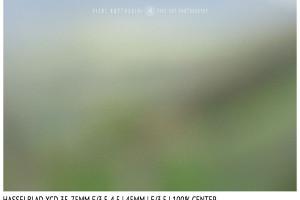 Hasselblad XCD 35-75mm | 45mm | Close Focus | Center | f/3.5