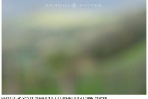 Hasselblad XCD 35-75mm | 45mm | Close Focus | Center | f/5.6