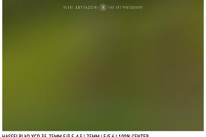 Hasselblad XCD 35-75mm | 75mm | Close Focus | Center | f/5.6