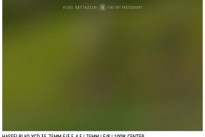 Hasselblad XCD 35-75mm | 75mm | Close Focus | Center | f/8