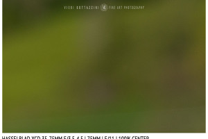 Hasselblad XCD 35-75mm | 75mm | Close Focus | Center | f/11